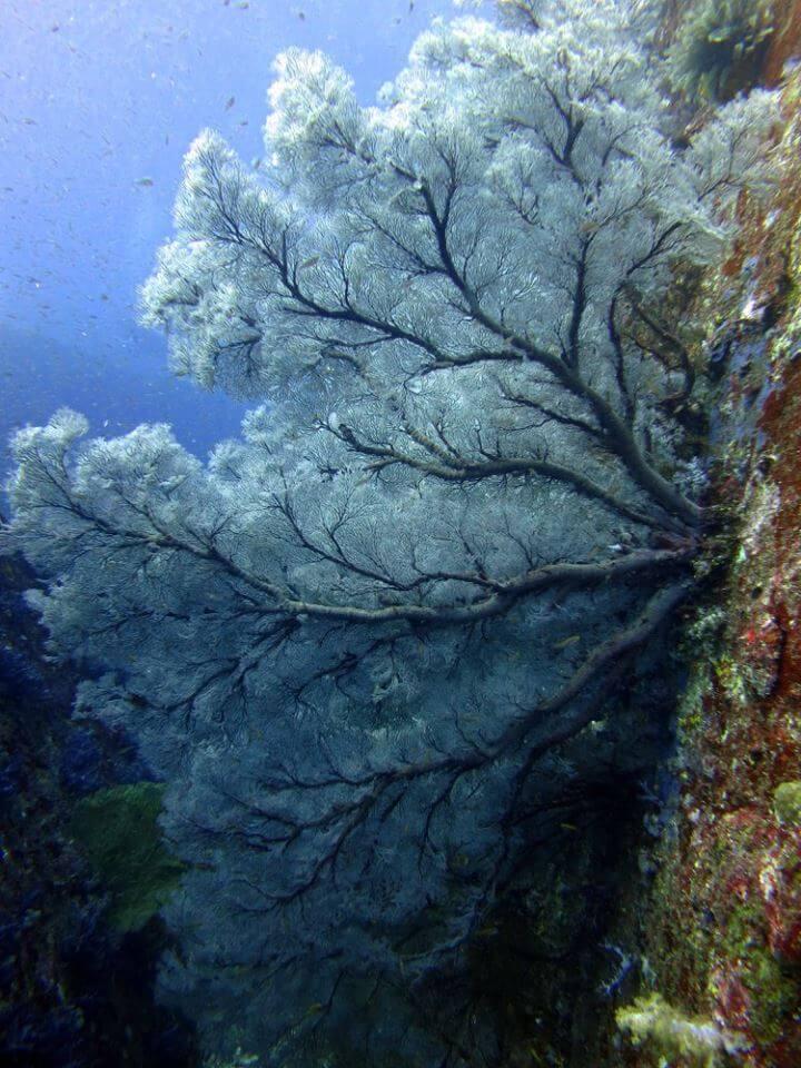 Tauchen similan islands, koh bon koh tachai richeleu rock khaolak adventures thailand