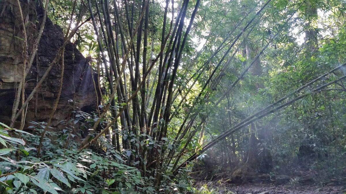 khao Sok See Khao Lak Adventures Khao Sok Nationalpark See 3 Tagestour Khao Sok Adventures safari