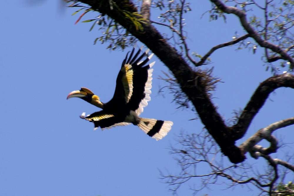 khao Sok See Khao Lak Adventures Khao Sok Nationalpark See 2 Tagestour Wildlife safari