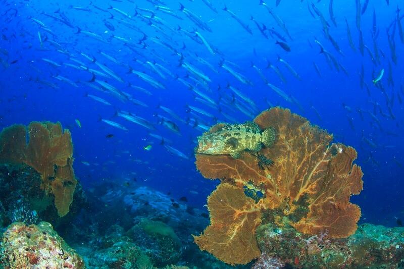 Tauchen similan islands koh bon koh tachai richelieu rock khao lak adventures thailand