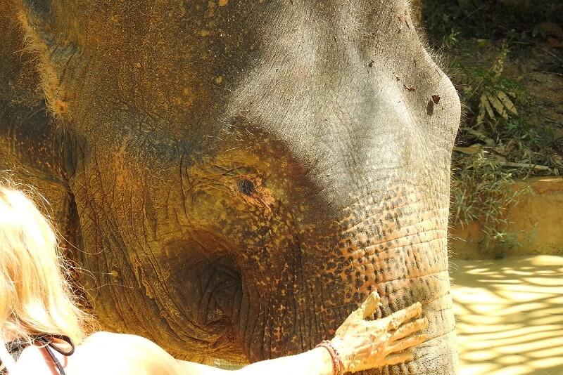 KhaoLak Adventures Ausflüge Khao Lak Khao Sok Elefanten Sanctuary Camp KhaoLak Thailand